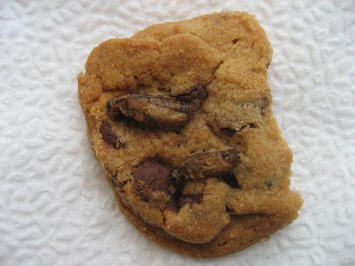 Cricut cookie