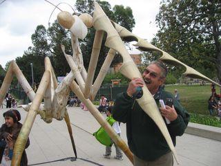 Bug Fair 1